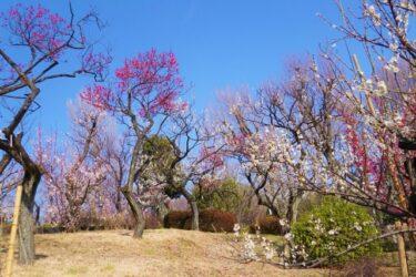 【Park & Garden Map】Hanegi Park – 羽根木公園
