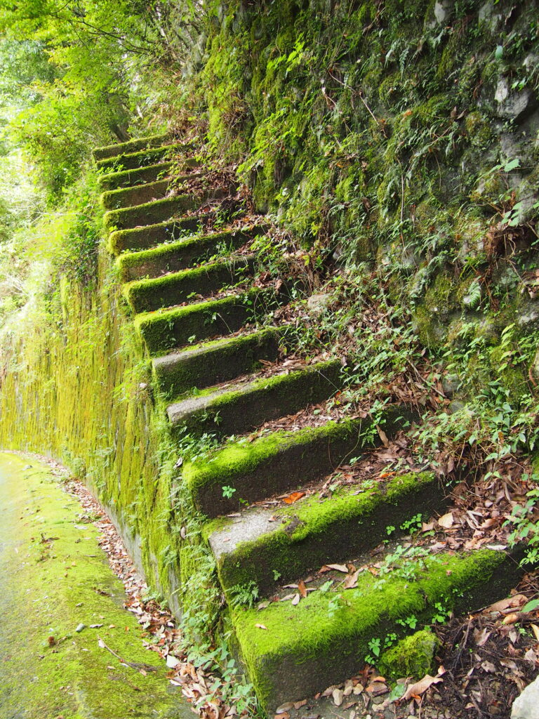 山道 階段