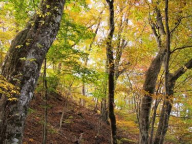 【Hiking Course Map】Mount Atago – 愛宕山ハイキングコース